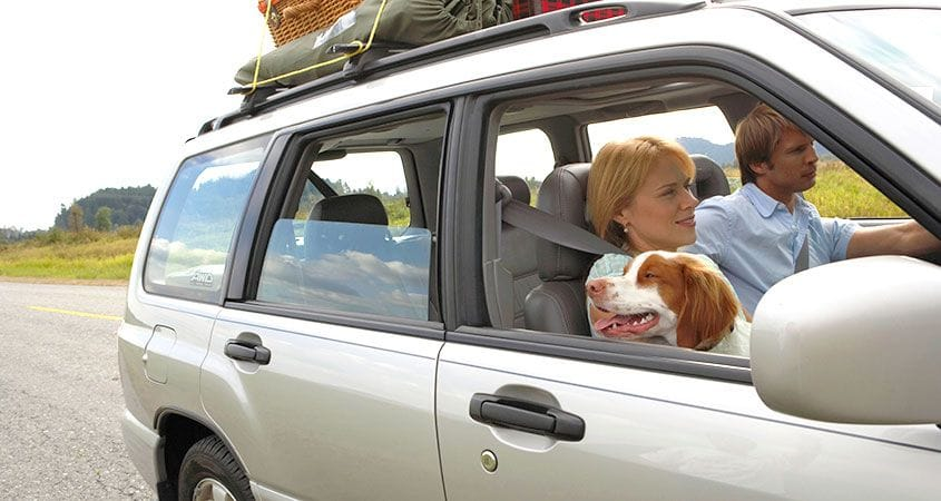 10 Tips For Epic Road Trips With Your Dog Cesar S Way