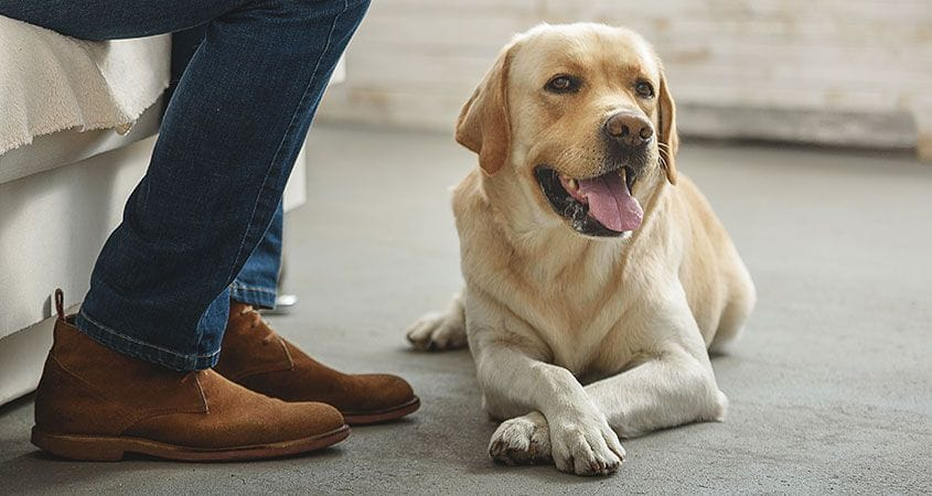 Happy dog sits at owners feet and smiles
