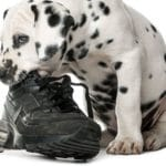 5 Steps to Stop Dog Chewing