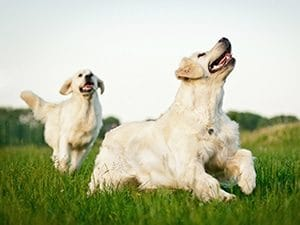dogs running through grass
