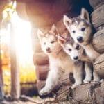 Challenging Puppy