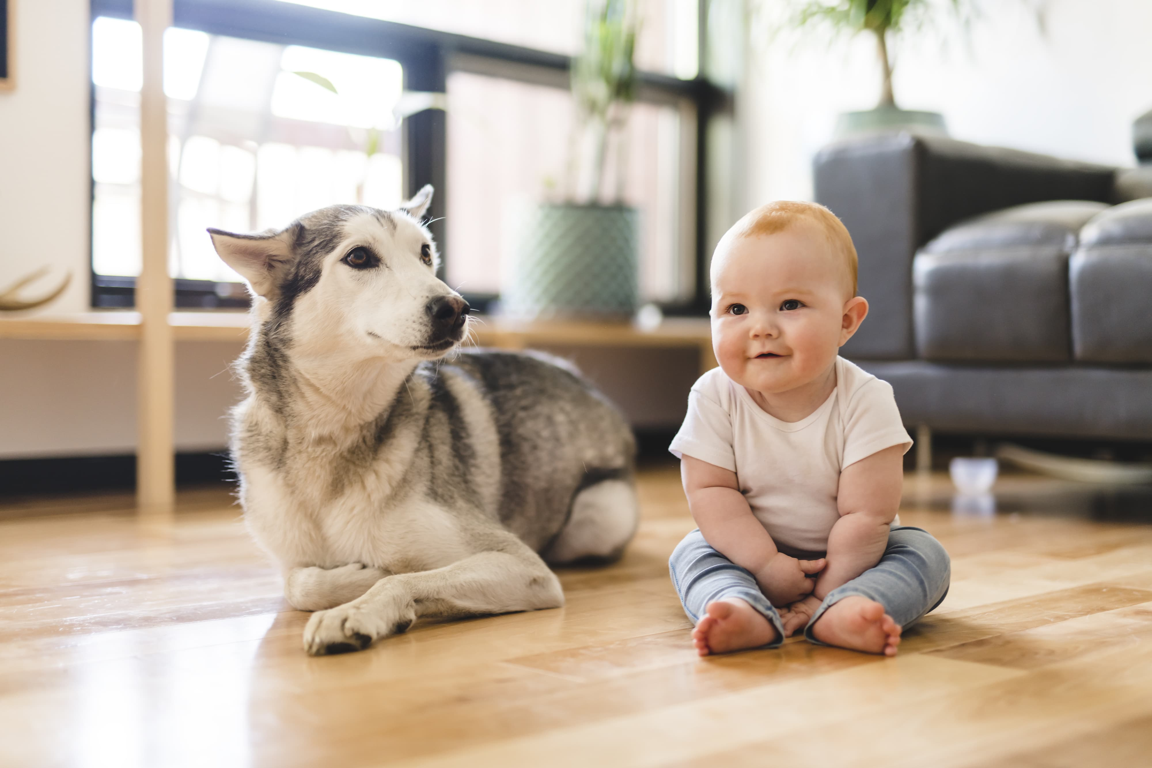 The 5 Stages Of A Baby Canine Friendship Part 1 Cesar S Way