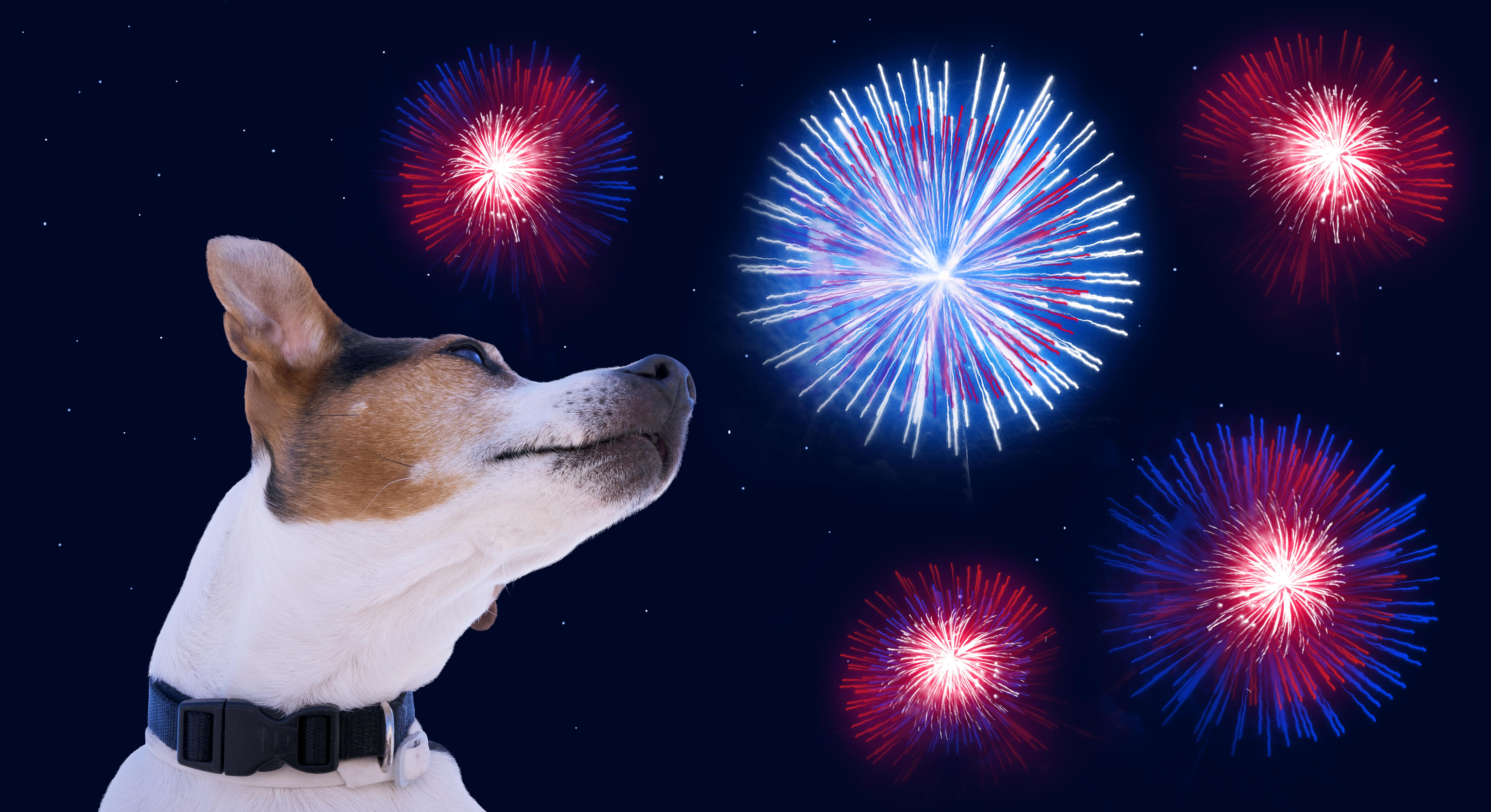 Keeping your dog safe when the fireworks start | 5 Key Tips