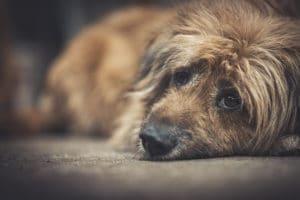 Warning Signs Of Dog Depression | Is My Dog Depressed
