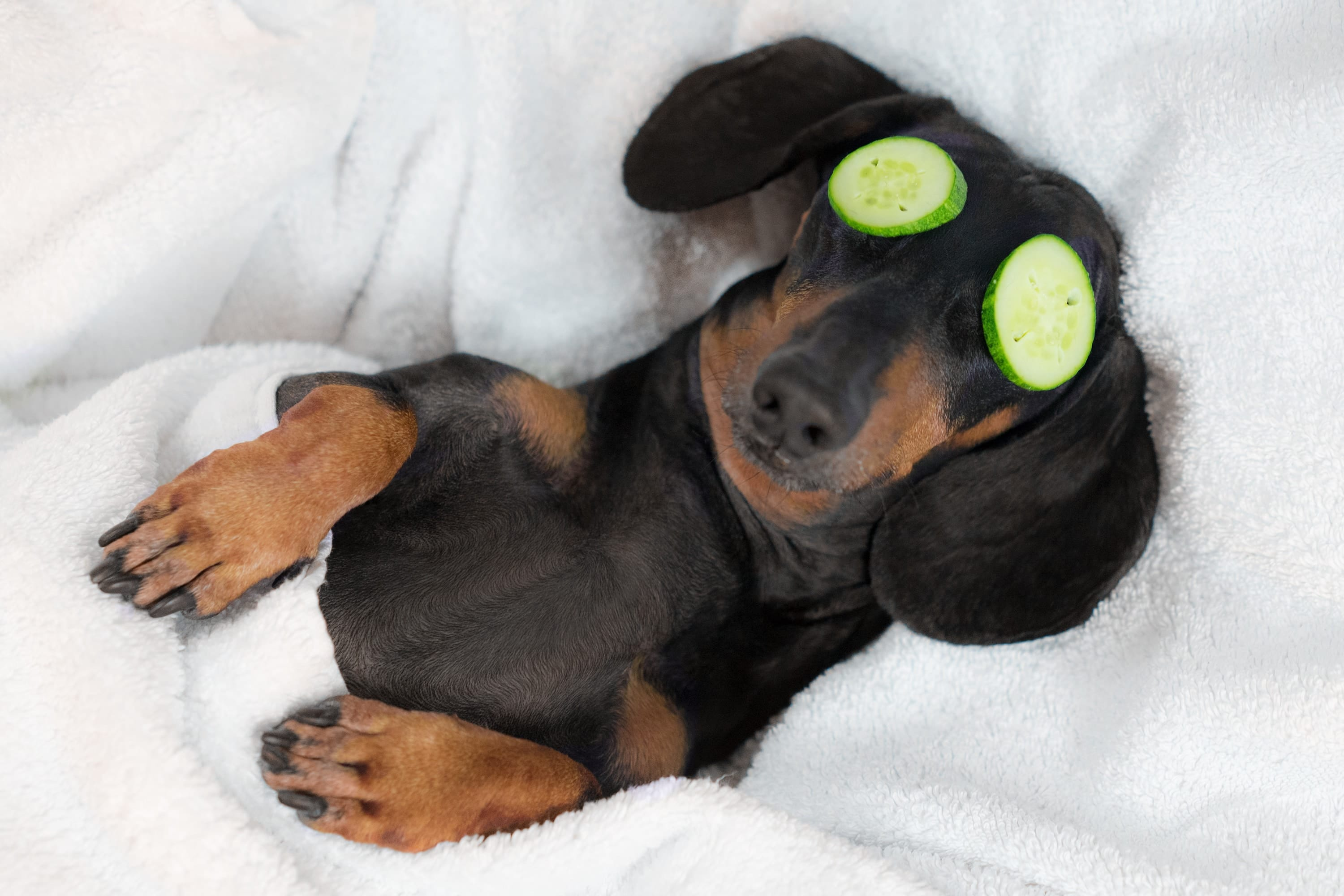 Solutions For Dog Acne   What Causes Acne For Dogs   Cesar's Way