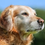 Keeping Your Senior Dog's Mind Healthy