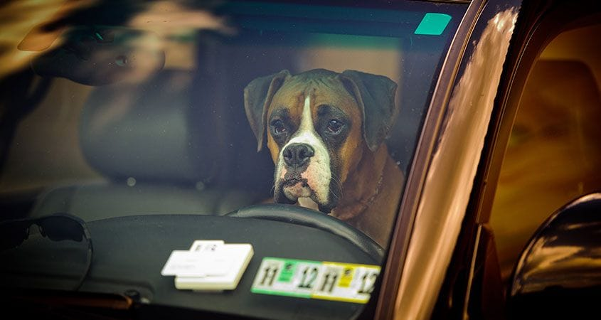 dog in car | oven on wheels