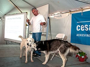Cesar Millan with a husky and another dog