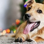 Cesar's Top 9 Holiday Tips For Dogs