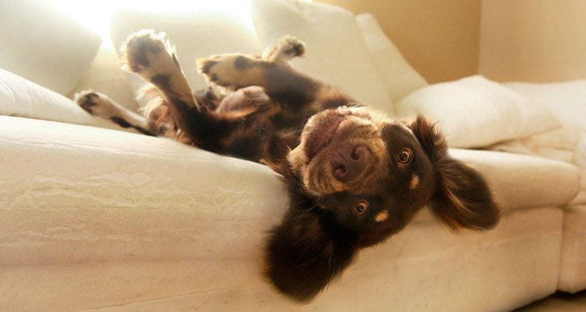 Cute puppy lays comfortably in a safe bed
