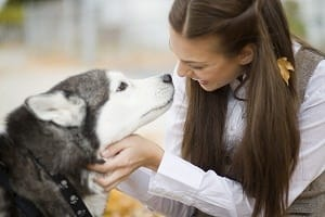 Husky with owner