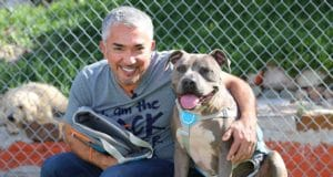 Cesar Millan with a pit bull