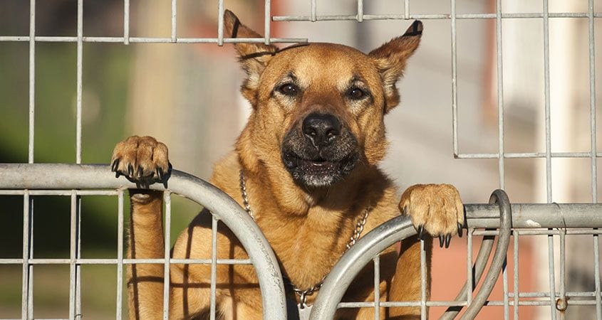 dog looking over fence | liability insurance