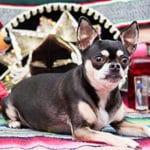 ¿Se Habla Spaniel? Dogs And Language: Part 1