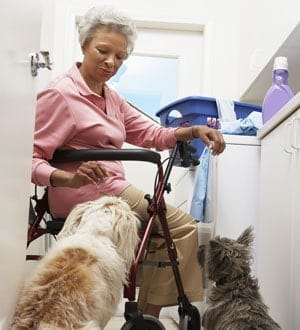 Senior citizen feeds two dogs as they sit down