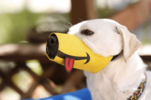 Example of The Funny Muzzle By Cesar Millan Yellow Muzzle