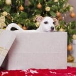 Giving Pets As Gifts This Holiday Season