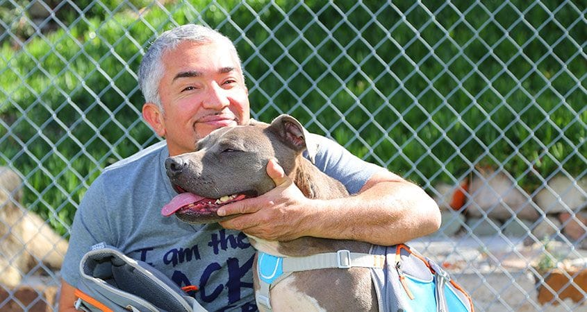 cesar-millan-sits-and-spends-time-with-kind-pitbull