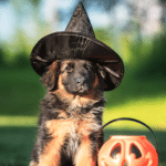 5 Halloween Dangers For Your Dog