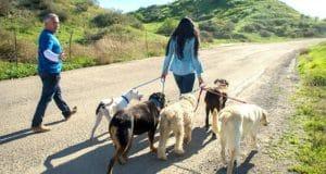 woman walking dogs | honor instinct