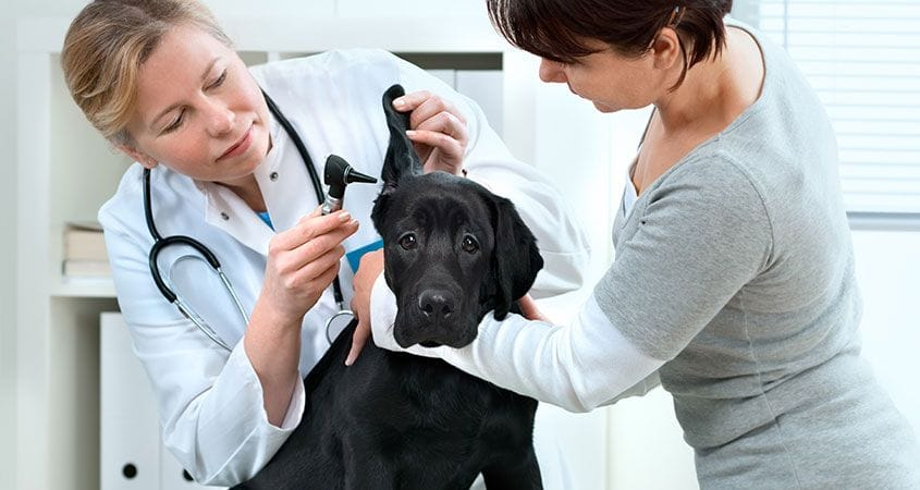 Image result for Tips for Choosing the Right Veterinarian for All of Your Pets