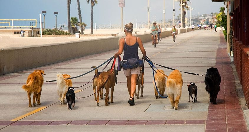 how-to-find-the-right-dog-walker