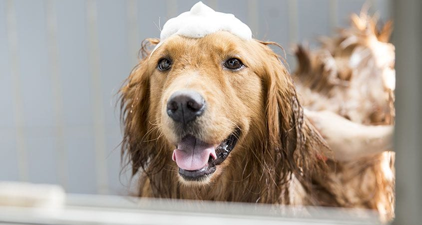 Verbazingwekkend How To Get Your Dog To Love Bath Time | Cesar's Way OX-22
