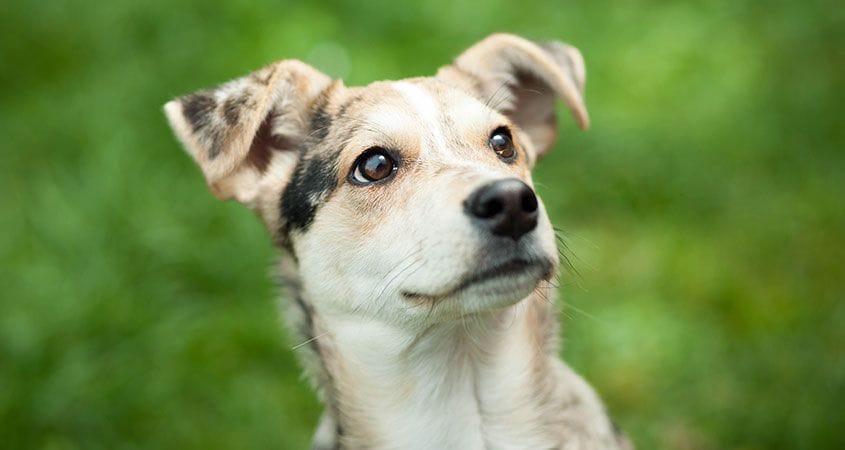Cesar's Way | Official Site of Dog Behaviorist Cesar Millan
