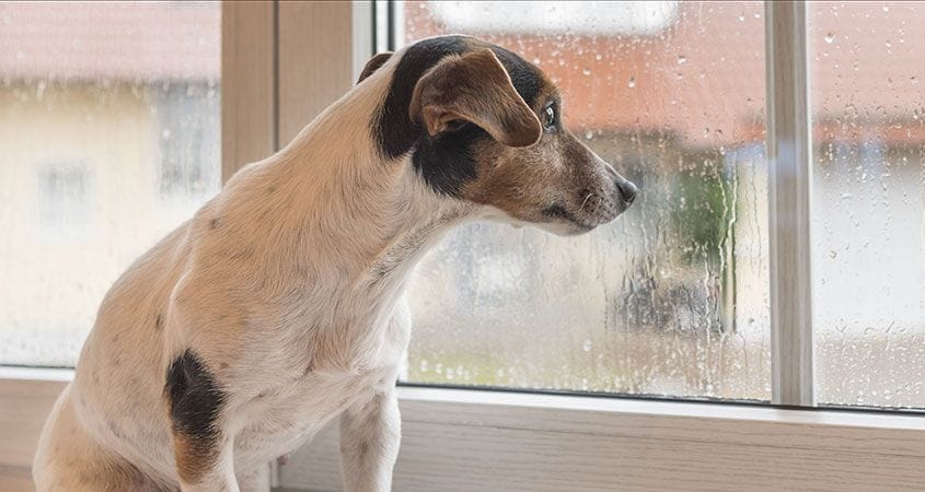 Is Bad Weather Coming? Ask Your Dog | Cesar's Way