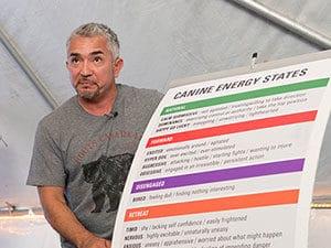Cesar with canine energy states list