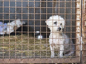 dog in cage at shelter