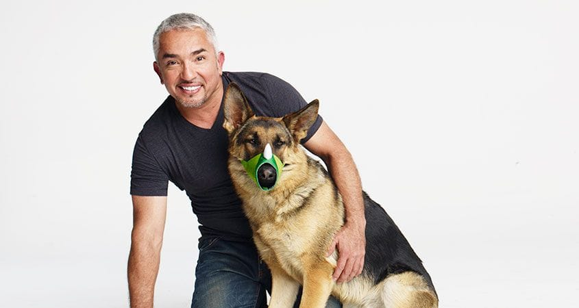 Ceaser Millan with a dog showing new Funny Muzzle that is safer for dogs