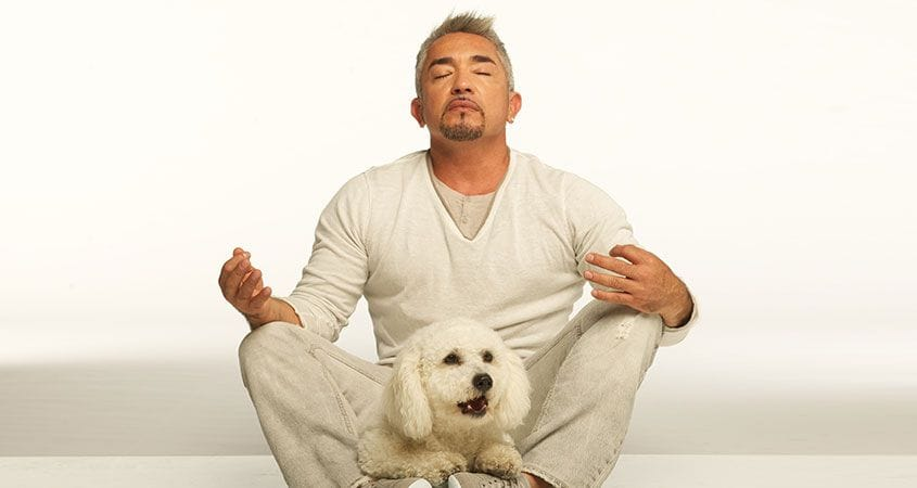 Cesar Millan sits with white dog