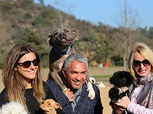Cesar with people and dogs