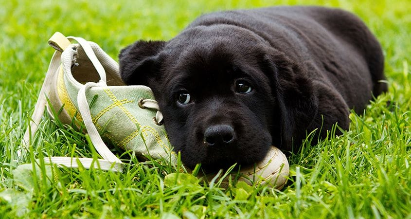 dog chewing stuff