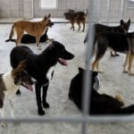 Top 5 Myths About Shelter Dogs