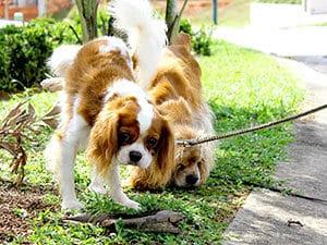 two dogs near sidewalk