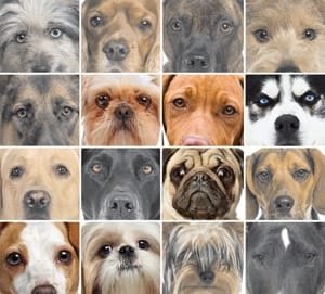 Dogs cute faces
