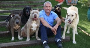 Cesar Millan with a pack of dogs