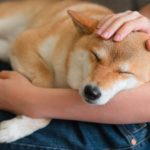 How to Be Calm and Assertive With Your Dog