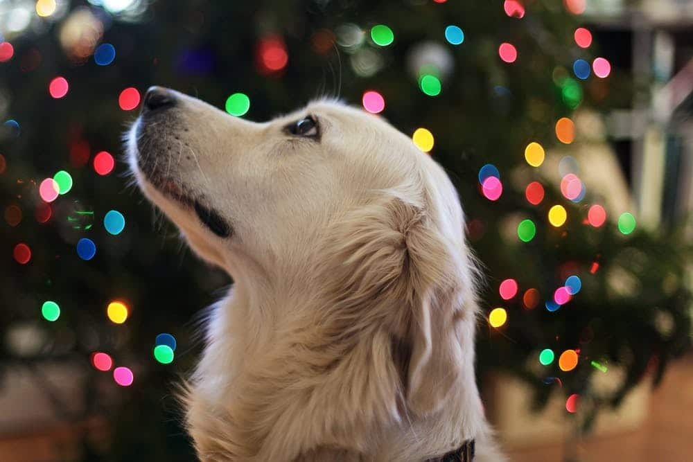 dog in front of lights