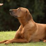 Treat Me Like A Dog! How Oprah Became A Better Pack Leader