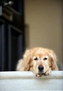sad dog sits outside alone