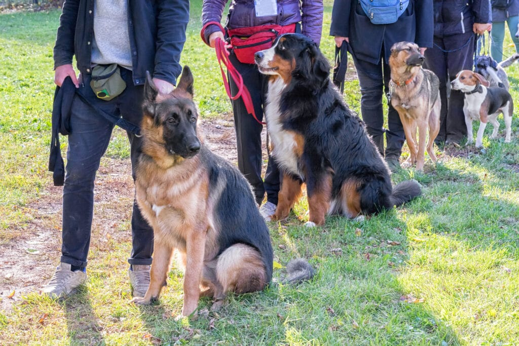 Dogs in obedience class and choosing the right class