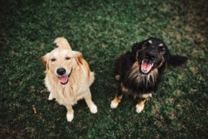 two dogs | canine energy
