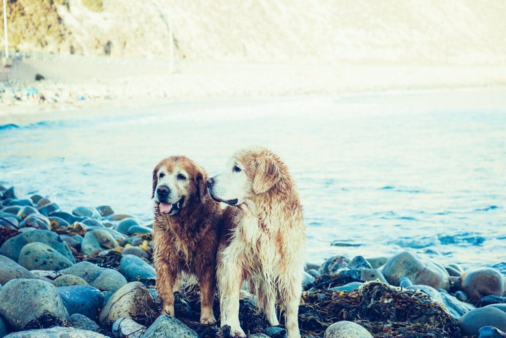 two wet dogs