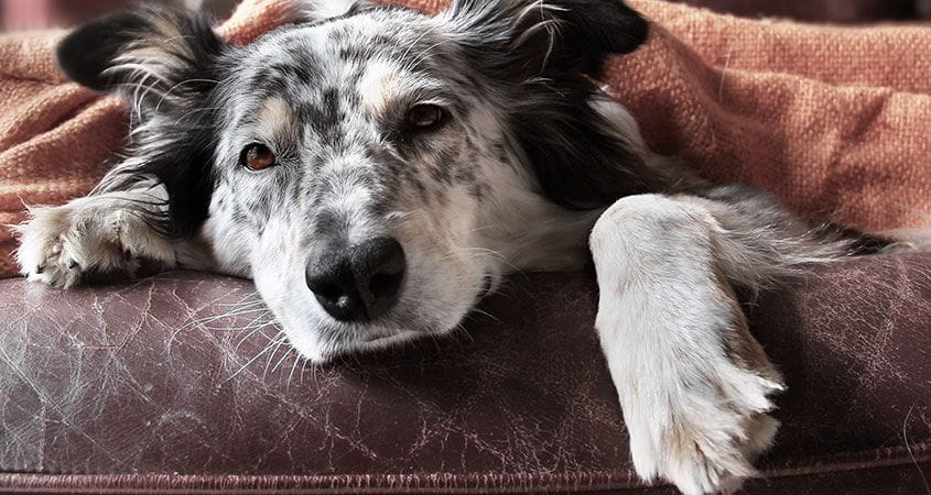 Early Signs Your Dog May Have Cancer What To Look Out For