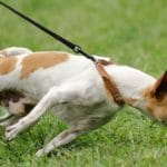 Top 5 Dog Walking Problems Solved!