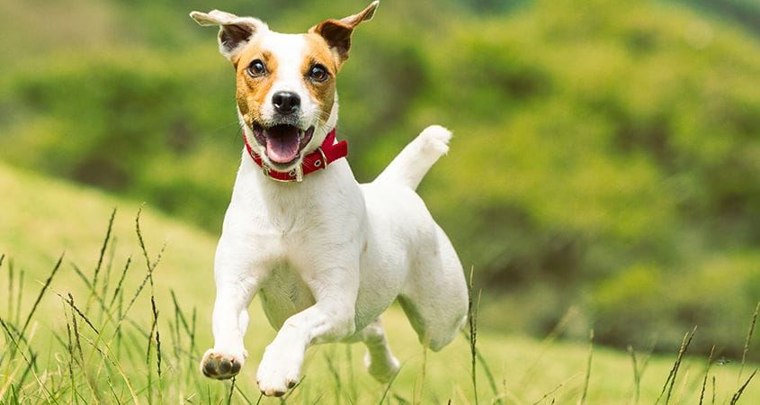 14 Top Terrier Breeds And Personality