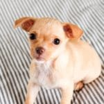 Puppy 101: The Ultimate Guide To Raising A Puppy